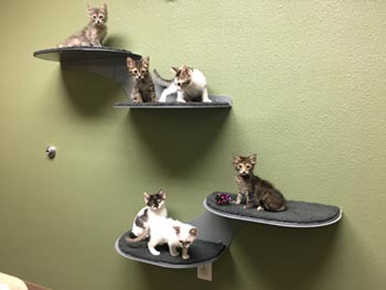 Cats Wall Kittens