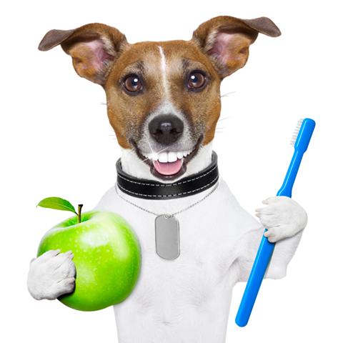 Dental Dog Toothbrush